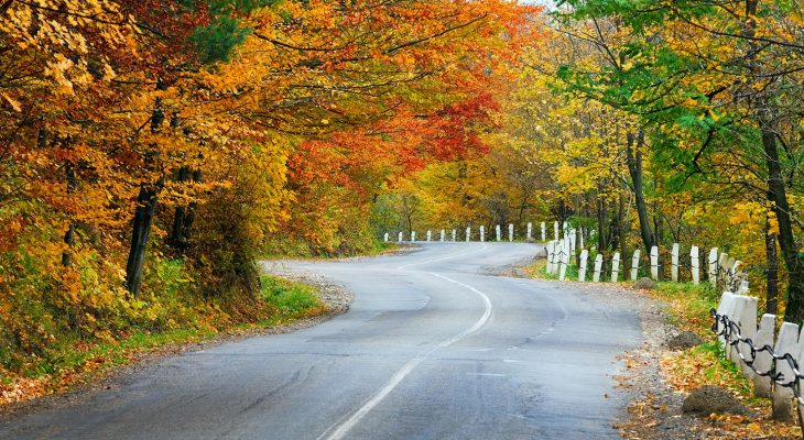A scenic fall road