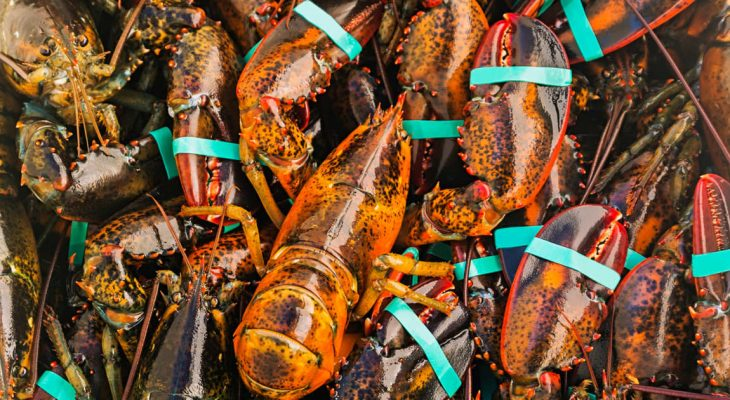 Maine Lobster Experience
